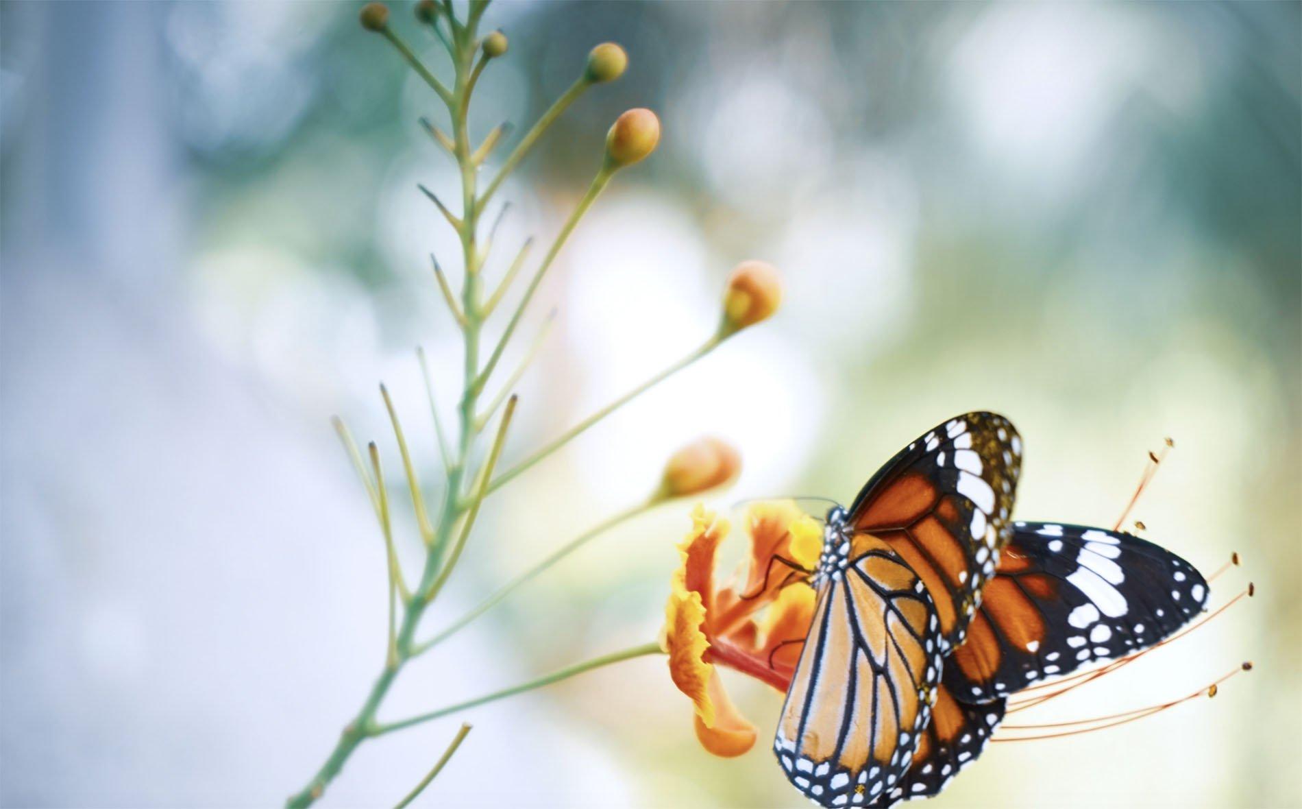 Foto farfalla Home